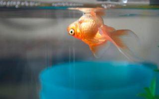 Почему умирают аквариумные рыбки