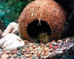 Использование кокоса для декорирования аквариума