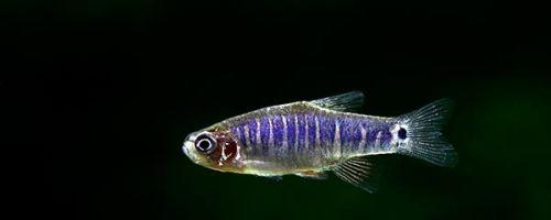Популярные виды маленьких аквариумных рыбок