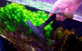 Как правильно чистить аквариум в домашних условиях