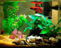 Запуск аквариума на 20 литров: подготовка воды, оборудование, рыбки и растения