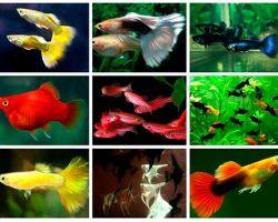 ТОП-20 самых популярных видов аквариумных рыбок