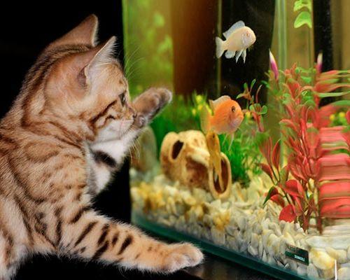 Что нужно знать начинающему про аквариумы
