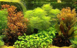 Аквариумные растения — названия видов, описание с фото
