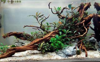 Советы по выбору и подготовке коряг для домашнего аквариума