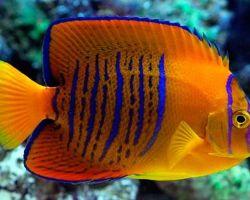 ТОП-10 самых дорогих аквариумных рыбок