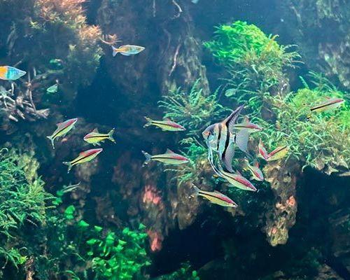 Таблицы совместимости разных видов аквариумных рыбок