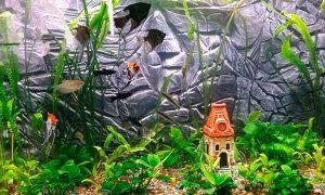 Задний фон для аквариума: разновидности, изготовление своими руками