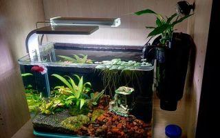 Запуск аквариума на 30 литров: подготовка воды, оборудование, рыбки и растения