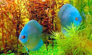 Как понизить или повысить кислотность воды в аквариуме