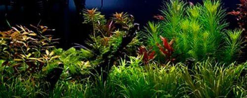 Принцип оформления голландского аквариума