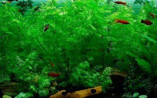 Почему воняет вода в аквариуме