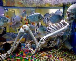 ТОП-10 хищных аквариумных рыбок