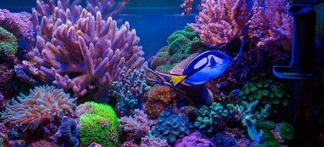 Морской аквариум: плюсы и минусы, необходимое оборудование, подходящие рыбки, обслуживание