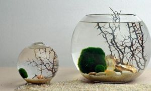 Круглый аквариум: плюсы и минусы, оформление, выбор растений и рыбок