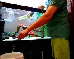 Как правильно сифонить грунт в аквариуме