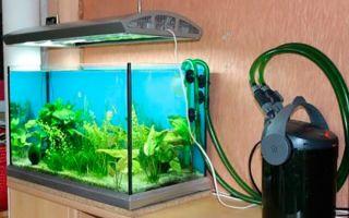 Внешний фильтр для аквариума: преимущества и изготовление своими руками