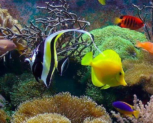 Популярные виды морских аквариумных рыбок
