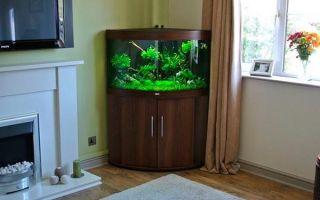 Угловой аквариум: виды и оформление