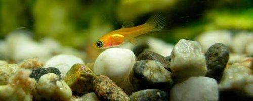 Как разводить аквариумных рыбок в домашних условиях