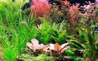 Как правильно сажать аквариумные растения
