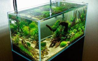 Изготовление аквариума из оргстекла своими руками