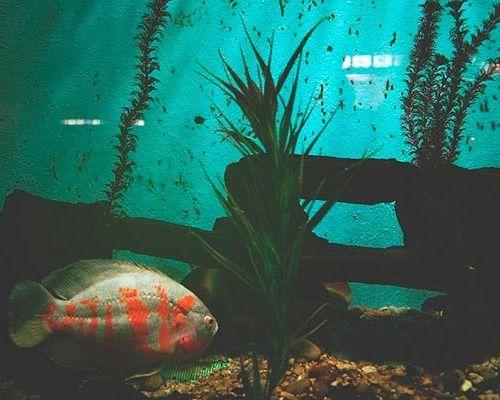 Оригинальные декорации для аквариума