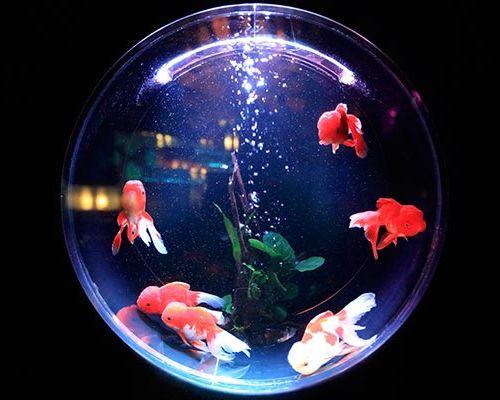 Как повысить или понизить жесткость воды в аквариуме