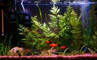 Аквариум на 50 литров: необходимое оборудование, оформление, рыбки и растения