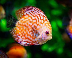 ТОП-15 самых красивых аквариумных рыбок