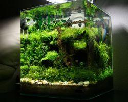 Нано аквариум: достоинства, оформление и обслуживание