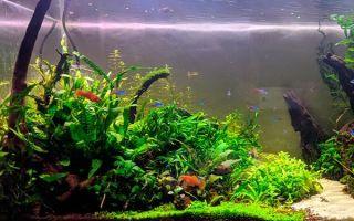 Аквариум-травник своими руками: создание, выбор растений и рыбок