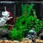 Идея дизайна аквариума