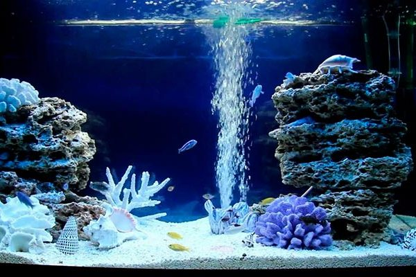 Псевдоморской аквариум