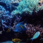 аквариум оформление