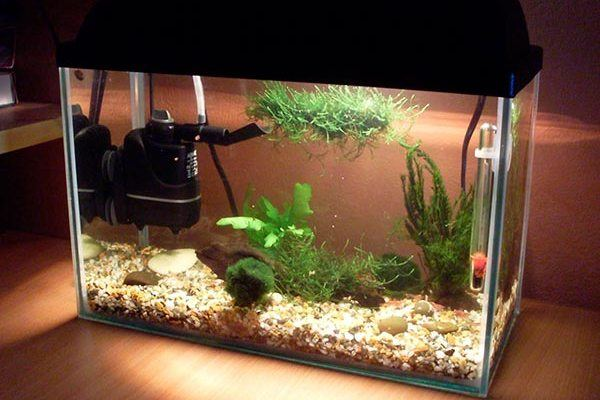 аквариум с внутренним фильтром