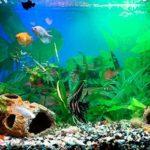 идея красивого аквариума