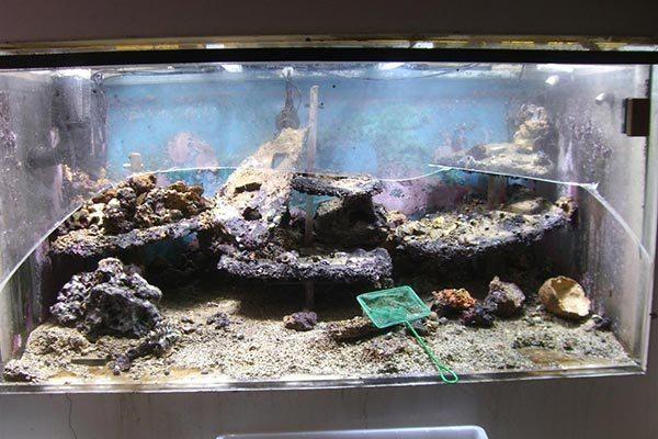 лопнувший аквариум
