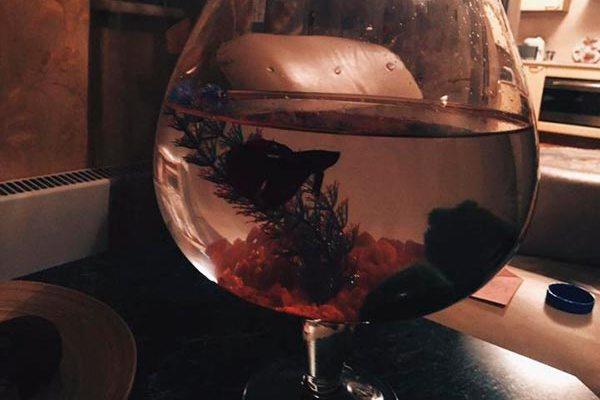 оформление аквариума бокала