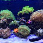оформленный аквариум