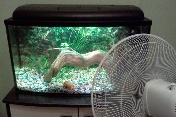 вентилятор и аквариум