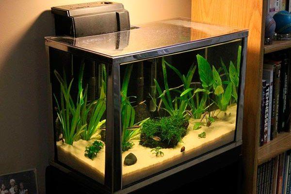аквариум с фильтром
