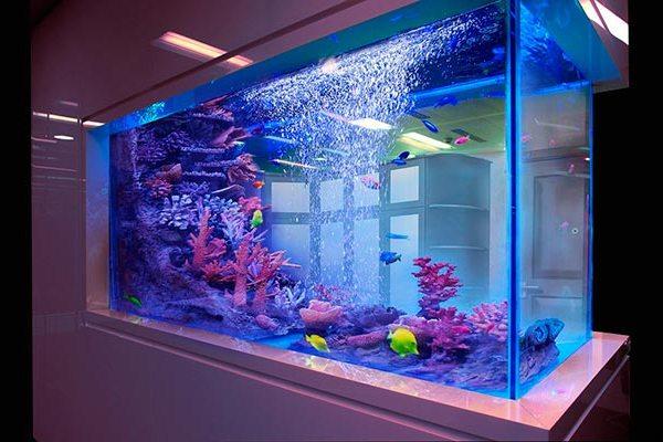 аквариум из оргстекла для дома