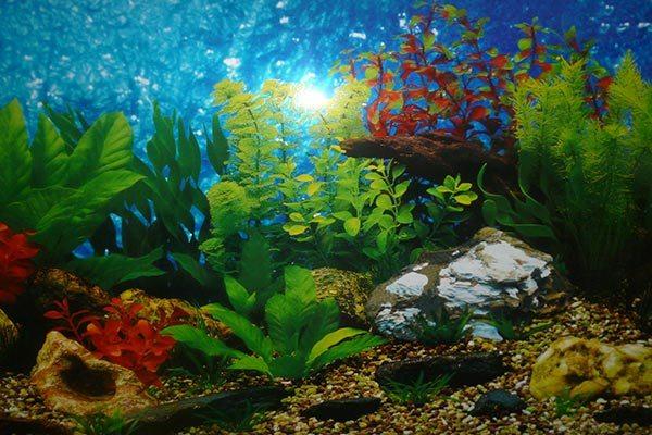 фон-пленка на аквариум
