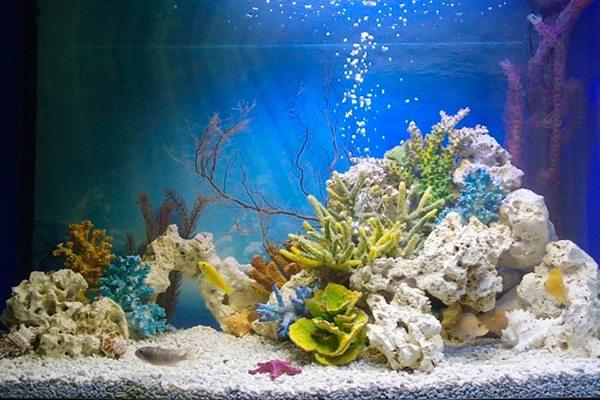 псевдоморе аквариум
