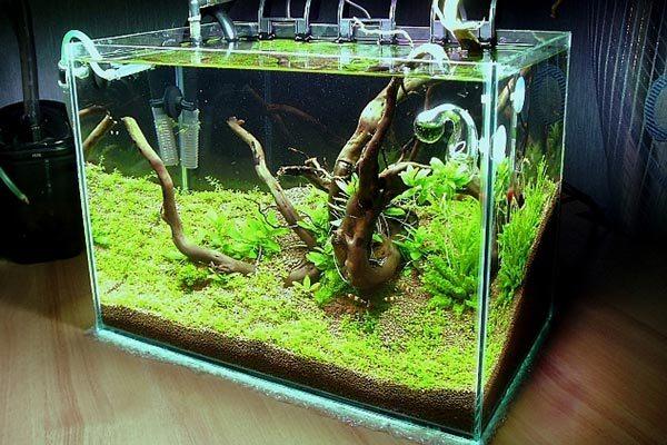 20 литровый аквариум