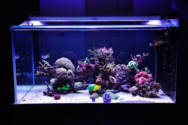 освещение морского аквариума